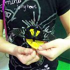 бабочка ест апельсин