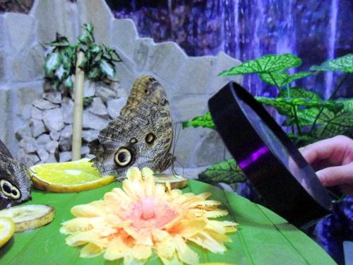 парк бабочек в кубе