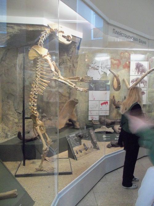 музей скелет пещерного медведя