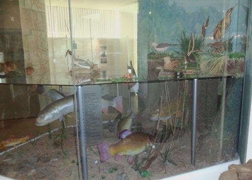 модель водоема музей