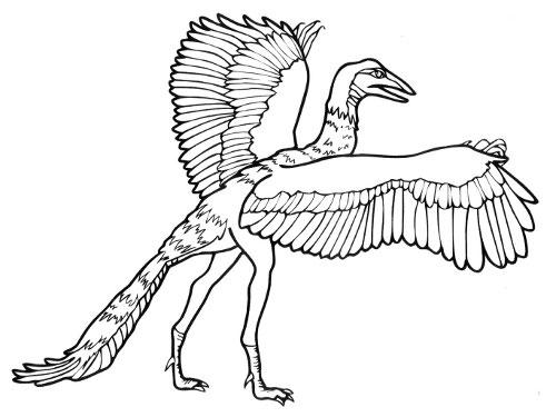 археоптерикс рисунок