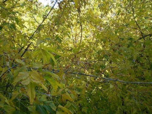 вид из окна осень