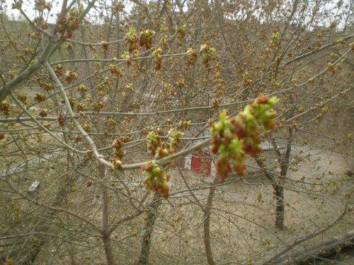 вид из окна весна