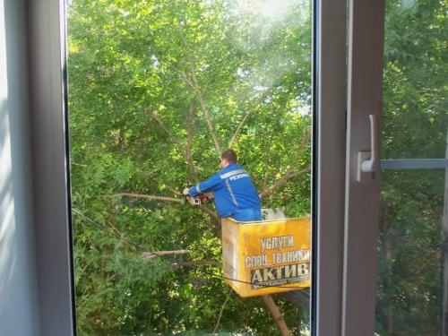 спилить дерево под окном