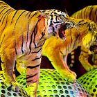 тигры на шарах