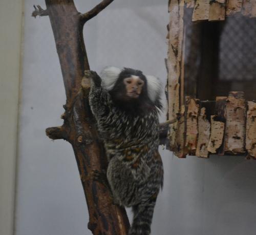 игрунка челябинский зоопарк