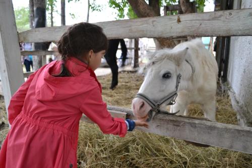 ребенок кормит пони