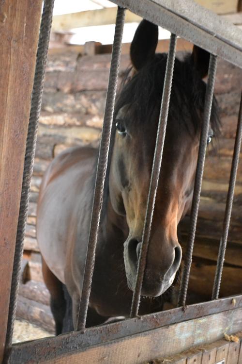 кск гармония кони