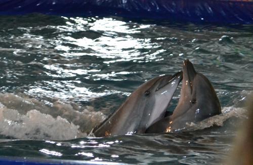 дельфины танцуют танго