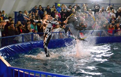 дельфин прыгает в обруч