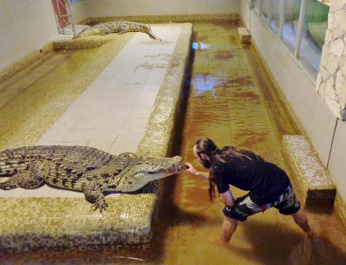 шоу крокодилов екатеринбург
