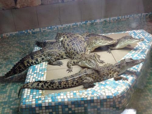 крокодилы екатеринбург
