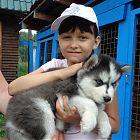 питомник эльбрус щенок хаски