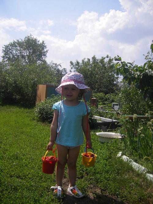 ребенок собирает ягоды